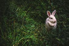 Free White Rabbit On Green Grass Stock Images - 83066534