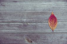 Free Orange And Red Leaf In Brown Wood Plank Stock Photography - 83066572