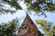 Free Brown Bare Tree Taken Photo Royalty Free Stock Images - 83066799