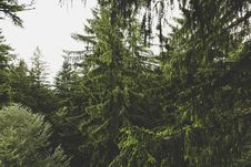 Free Green Leaved Trees During Daytime Royalty Free Stock Photo - 83066995