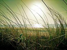 Free Green Grass Near Beach Under The Sun Stock Image - 83067021