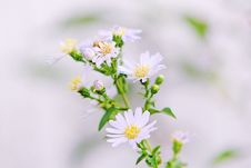 Free Close Up Photo Of White Petaled Flower With Yellow Stigma Royalty Free Stock Photography - 83067297