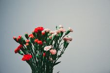 Free Carnation Bouquet Royalty Free Stock Photos - 83067348