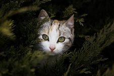 Free Focus Photography Of Gray Orange And Black Kitten Beside Green Plant Stock Photo - 83067810