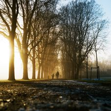 Free Silhouette Of People Walking Along Dirt Road Between Array Of Trees Against Sunlught Stock Photo - 83067820