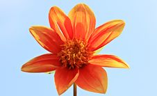 Free Orange Petal Flower Royalty Free Stock Photos - 83067908