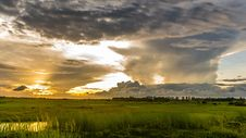 Free Macro Shot Of Green Grass Field Under Cloudy Sky During Sunset Stock Photos - 83067913
