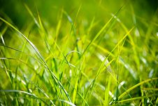 Free Green Grass Macro Photography Stock Image - 83067951