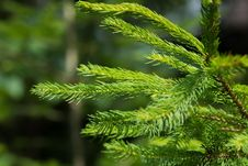 Free Green Pine Tree Leaf Closeup Photography During Daytime Stock Photos - 83068113