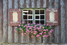 Free Green And Pink Flower On Green And White Wooden Framed Window Royalty Free Stock Photos - 83068158