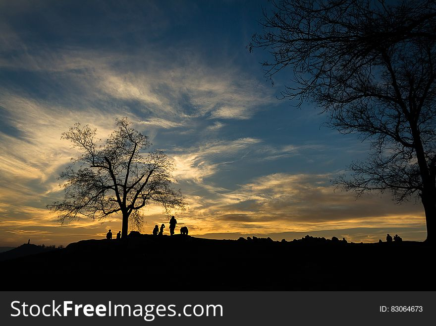 Silhouette of Person Near Bare Tree at Sunset