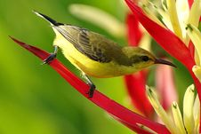 Free Selective Focus Photography Of Black Green And Yellow Long Beaked Bird Stock Images - 83074454