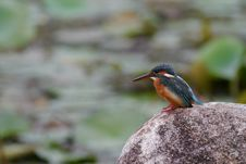 Free Black And Orange Long Beak Bird On Brown Rock During Daytime Stock Images - 83074504