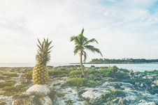 Free Pineapple On Rock  Stock Images - 83074884