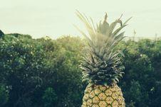 Free Pineapple Next To Bushes Royalty Free Stock Image - 83074896