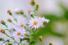 Free Wildflowers In Bloom Stock Photos - 83075083