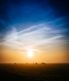Free Cows In Field At Sunset Royalty Free Stock Images - 83075139