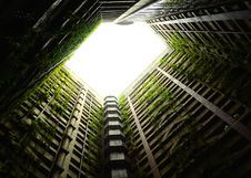 Free Green Vines In Building Atrium  Royalty Free Stock Photography - 83075147