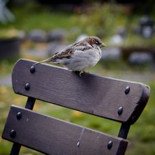 Free Bird On Wooden Chair Stock Photography - 83075182