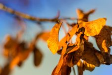 Free Dry Autumn Leaves Royalty Free Stock Image - 83075206