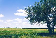 Free Field Of Crops On Sunny Day Royalty Free Stock Photography - 83075227