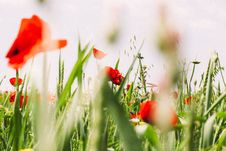 Free Wildflowers In Field Stock Photos - 83075273