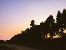 Free Silhouettes Of Tall Trees Near Dirt Road During Sunset Royalty Free Stock Image - 83075346
