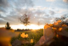 Free Brown Leaves During Golden Hour Stock Photos - 83075373