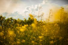Free Wildflowers In Meadow Stock Photos - 83075403