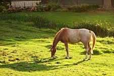 Free Brown And White Horse Eating Green Grass During Daytime Royalty Free Stock Images - 83075419
