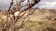 Free Brown Snail On Brown Bare Tree Royalty Free Stock Photos - 83075498