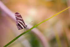 Free Butterfly On Green Branch Royalty Free Stock Photo - 83075585