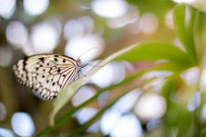 Free Butterfly On Green Leaf Stock Photos - 83075653
