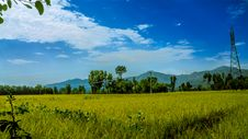 Free Green Rice Field Surrounded By Trees Under Clear Blue Sky Stock Images - 83075814
