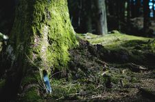 Free Mossy Tree And Land Royalty Free Stock Photo - 83075955