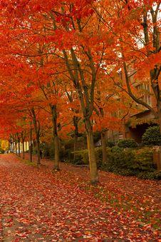 Free Orange Leafed Trees On Pathway Stock Photos - 83076153