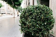 Free Shrub In Jardiniere Beside Sidewalk Stock Photo - 83076500