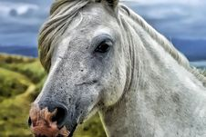 Free Close Up Photography Of Gray And White Horse Stock Photo - 83076680