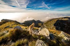 Free Brown And White Short Coat Dog On Mountain Royalty Free Stock Images - 83076689