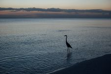 Free Silhouette Of Duck On Shore During Sunset Stock Images - 83076704