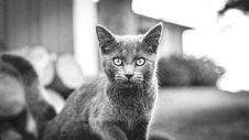 Free Black And White Cat Royalty Free Stock Photography - 83076977