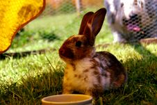 Free Brown And White Rabbit On Green Grass Stock Photos - 83077073