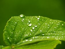 Free Green Leaf With Water Dew Stock Photo - 83077130