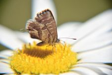 Free Butterfly On Yellow Flower Royalty Free Stock Image - 83077236