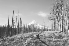 Free Forest And Snow Covered Mountain Royalty Free Stock Images - 83078169