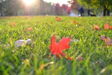Free Autumn Leaves On Green Grass Royalty Free Stock Images - 83078469
