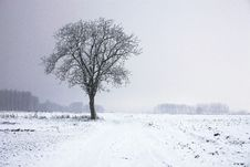 Free Lone Tree In Winter Landscape Stock Image - 83078471