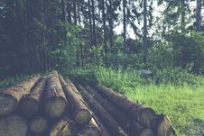 Free Wood Logs Near Trees Stock Images - 83078514