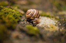 Free Snail Closeup Stock Image - 83078781