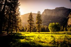 Free Green Grass Field And Green Tress During Day Time Stock Images - 83078934